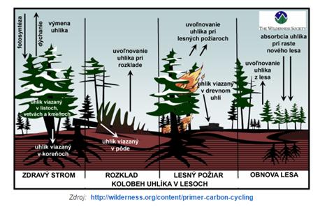 uhlik les požár.png